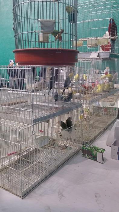 Ornitologia ezagutzeko aukera - 7