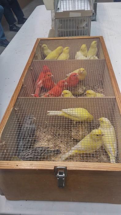 Ornitologia ezagutzeko aukera - 2