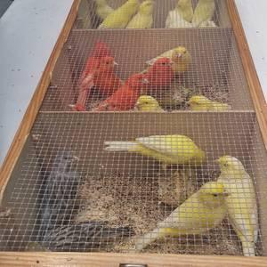 Ornitologia ezagutzeko aukera