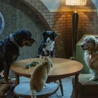 Como perros y gatos: la patrulla unida familiarteko filmaren emanaldia