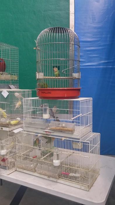 Ornitologia ezagutzeko aukera - 6