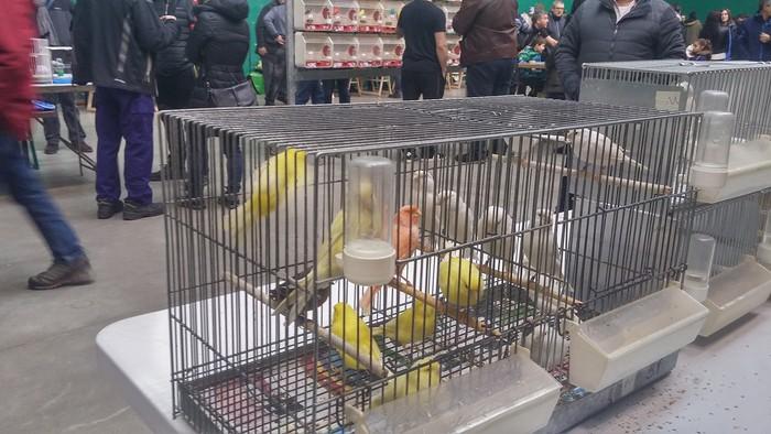 Ornitologia ezagutzeko aukera - 4